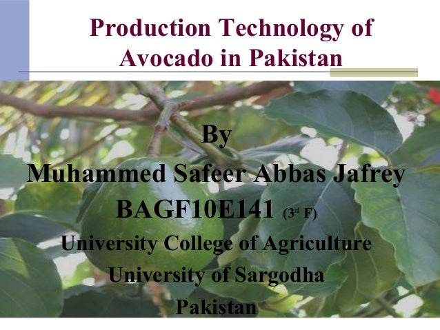 Production Technology of Avocado in Pakistan