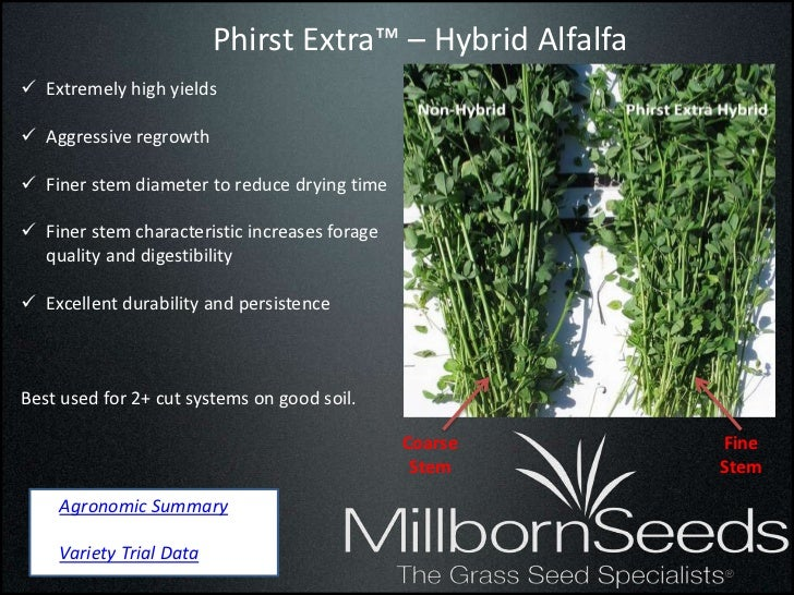 Phirst Extra™ – Hybrid Alfalfa Extremely high yields Aggressive regrowth Finer stem diameter to reduce drying time Fin...