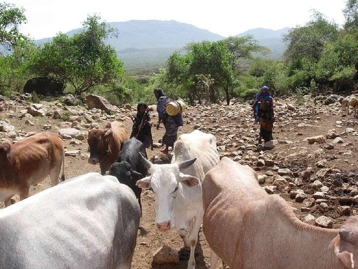 PROEXPOSURE East Africa Drought: Borana Pastoralists Southern Ethiopia