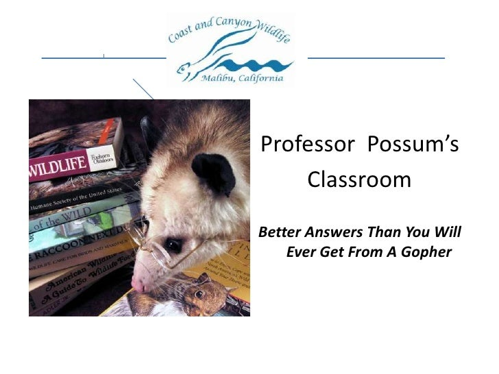 Professor  Possum's<br />Classroom<br />Better Answers Than You Will Ever Get From A Gopher<br />