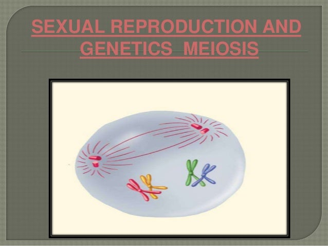 SEXUAL REPRODUCTION AND GENETICS MEIOSIS