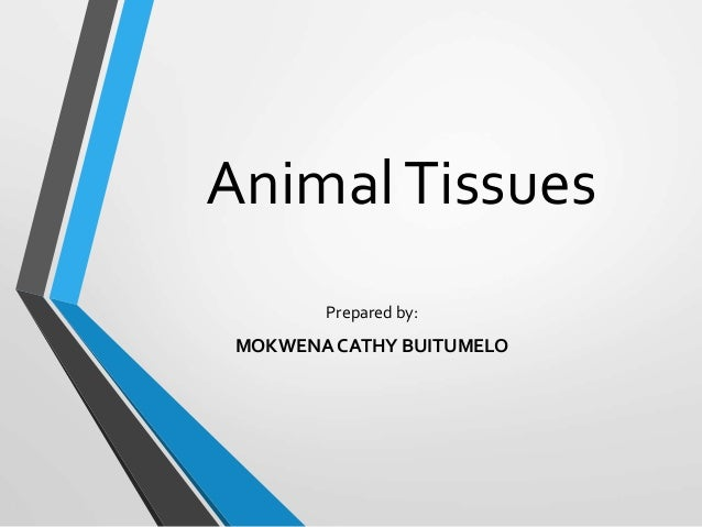 AnimalTissues Prepared by: MOKWENA CATHY BUITUMELO