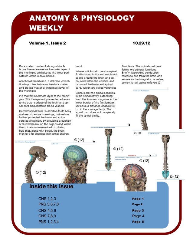 ANATOMY & PHYSIOLOGY        WEEKLY        Volume 1, Issue 2                                                               ...