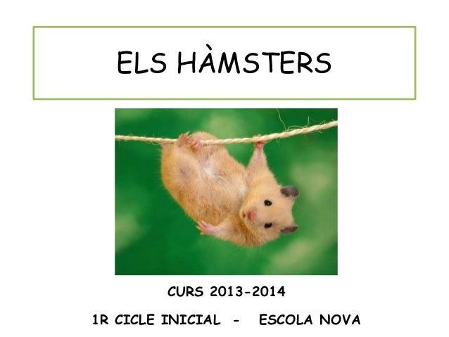 Projecte els hàmsters 1 r ESCOLA NOVA