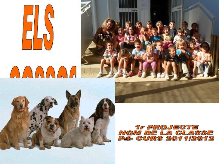 Projecte gossos p4