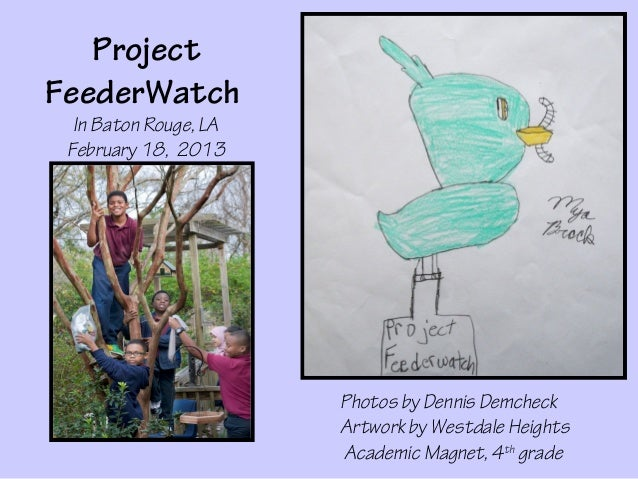 ProjectFeederWatch  In Baton Rouge, LA February 18, 2013                       Photos by Dennis Demcheck                  ...