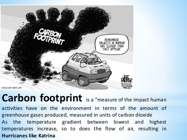 human impact on the environment essay