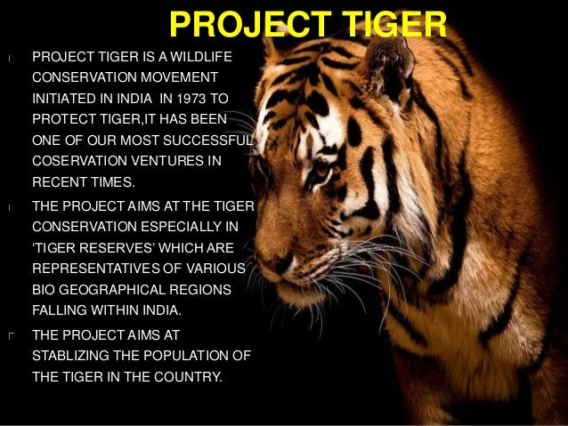 an essay about project tiger Free essays on essay on project tiger get help with your writing 1 through 30.