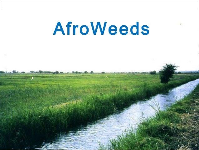AfroWeeds