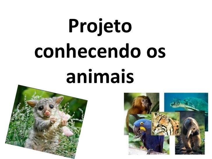 Projeto conhecendo os animais