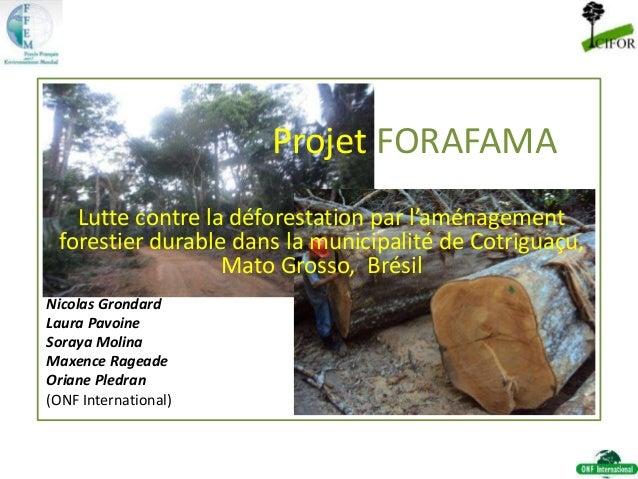 Projet FORAFAMA Lutte contre la déforestation par l'aménagement forestier durable dans la municipalité de Cotriguaçu, Mato...