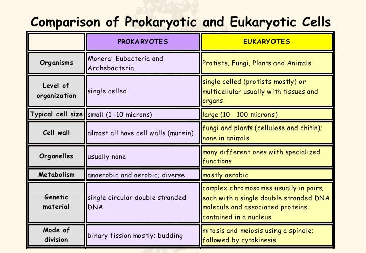 why is it important to differentiate between eukaryotic and prokaryotic cells Prokaryotic cells is the complicated name for 'simple cells' like bacteria that have little organelle eukaryotic cells are the more complicated ones, like animal cells as for why they are important, well they make up living things like animal cells and plant cells just type it in in google, there's loads of info.