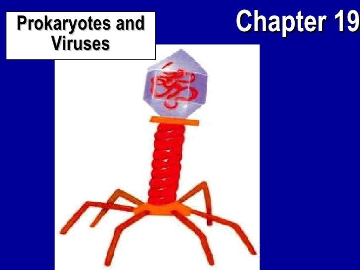 Prokaryotes Virus APBio