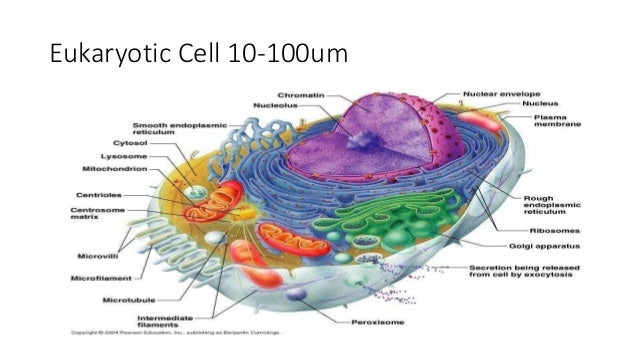 Animal and Plant Cell Structure Presentation