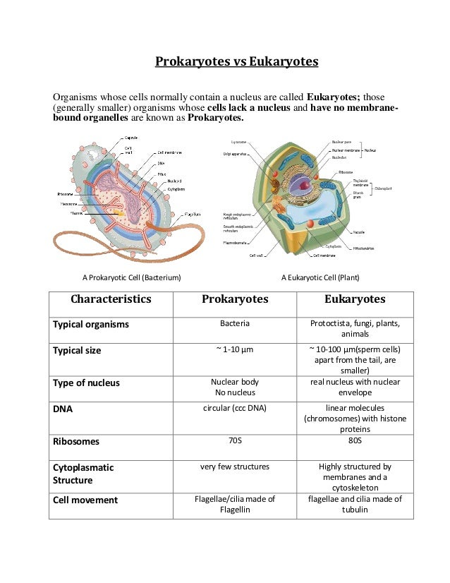 Eukaryotes And Prokaryotes Worksheet on Transcription And Translation Coloring Worksheet