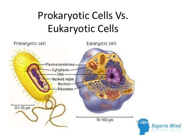 Eukaryotic and prokaryotic similarities