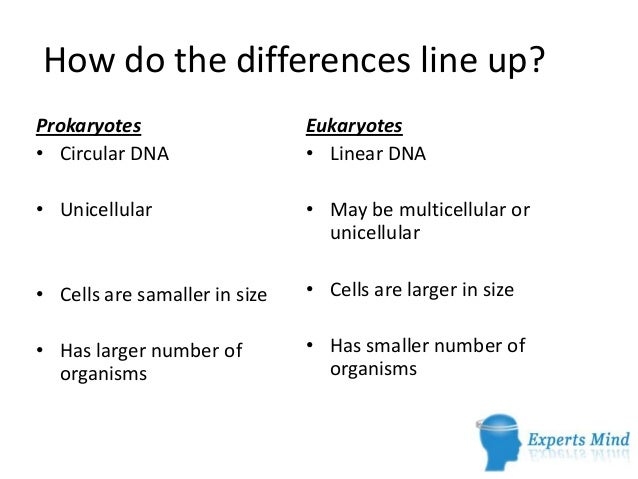 prokaryotic cells vs  eukaryotic cells