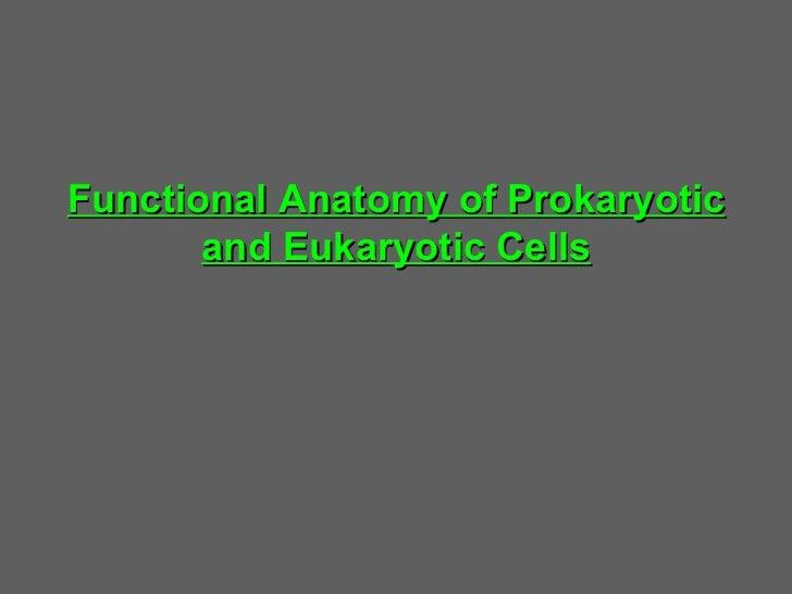 Prokaryotic & eukaryotic cells  3