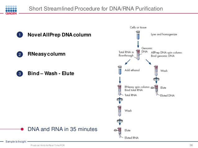 Practical Hints for Successful PCR