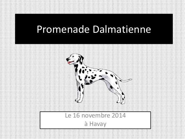 Promenade Dalmatienne  Le 16 novembre 2014  à Havay