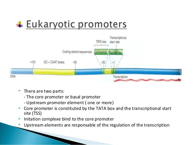Regulation of eukaryotic gene sequence expression Lecture ppt download