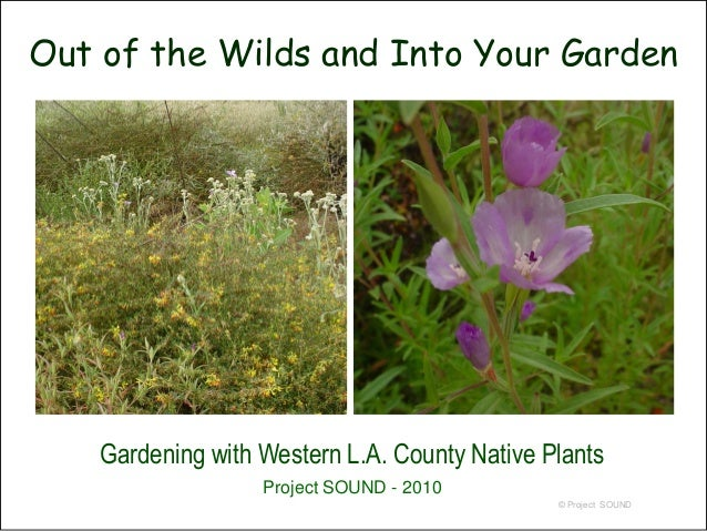 Promoting pollinators   2010