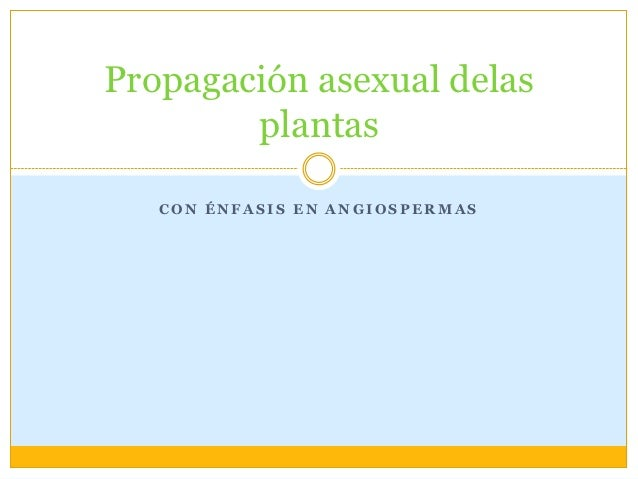 Propagación asexual delas        plantas   CON ÉNFASIS EN ANGIOSPERMAS