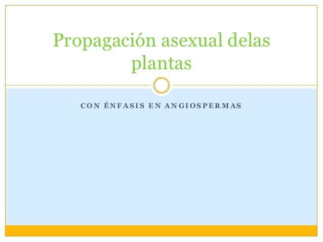 Propagación asexual