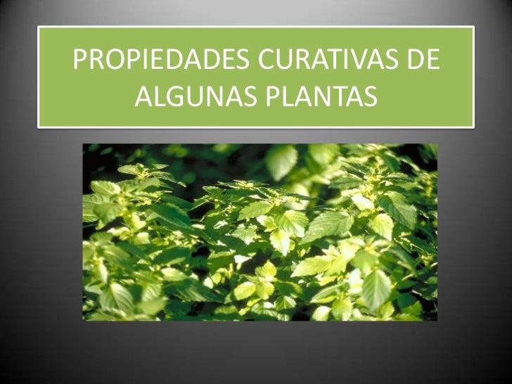 PROPIEDADES CURATIVAS DE    ALGUNAS PLANTAS
