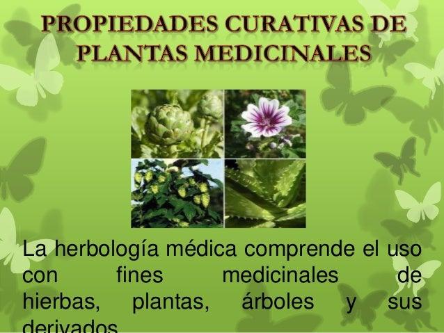 La herbología médica comprende el uso con fines medicinales de hierbas, plantas, árboles y sus