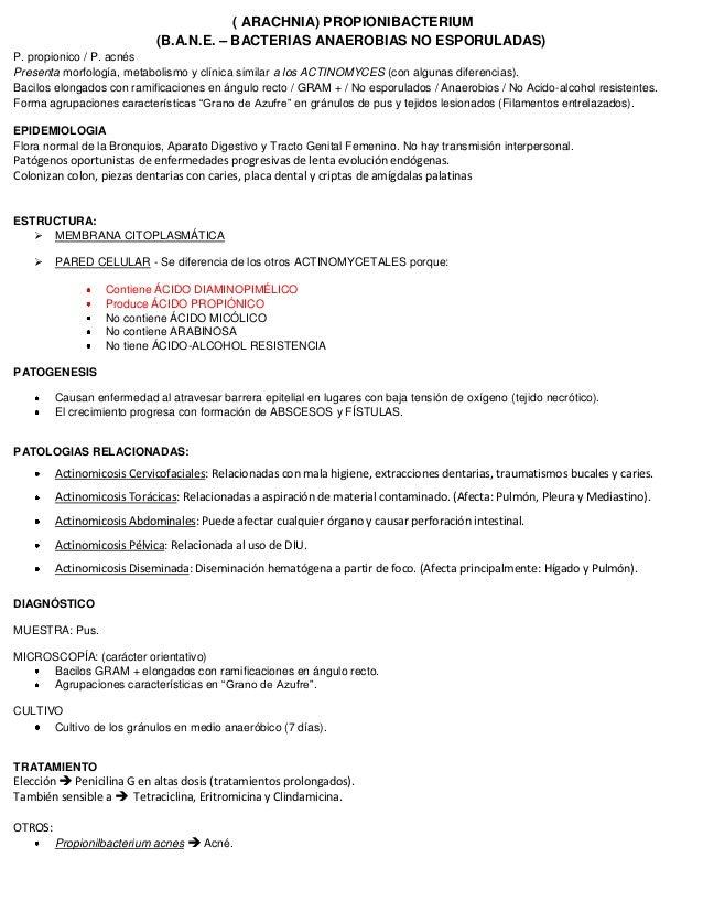 ( ARACHNIA) PROPIONIBACTERIUM (B.A.N.E. – BACTERIAS ANAEROBIAS NO ESPORULADAS) P. propionico / P. acnés Presenta morfologí...