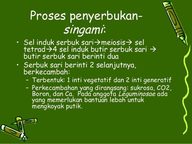Proses penyerbukan-         singami:• Sel induk serbuk sarimeiosis sel  tetrad4 sel induk butir serbuk sari   butir se...