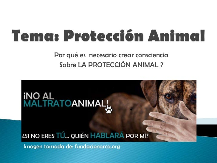 Proteccion Animal
