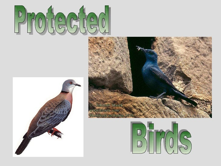 Protected Birds