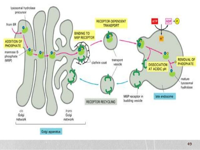 protein synthesis disorders