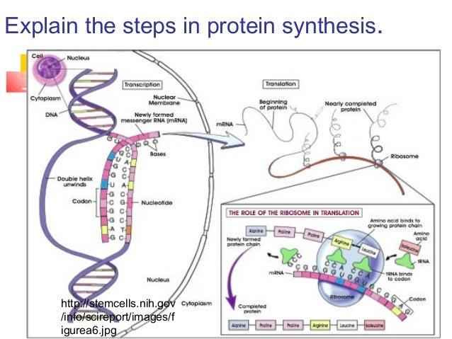 genetic coding expression transcription and translation essay