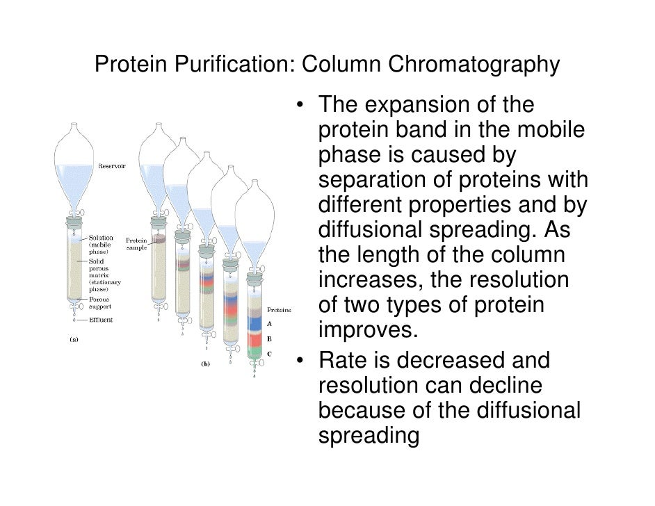 protien purification Affinity purification is based on the specific interaction of a target molecule with an immobilized ligand milliporesigma offers a broad portfolio of tools for affinity purifying tagged recombinant proteins, antibody purification, nucleic acid purification, protein-protein interaction studies, and albumin/igg depletion from serum or plasma.