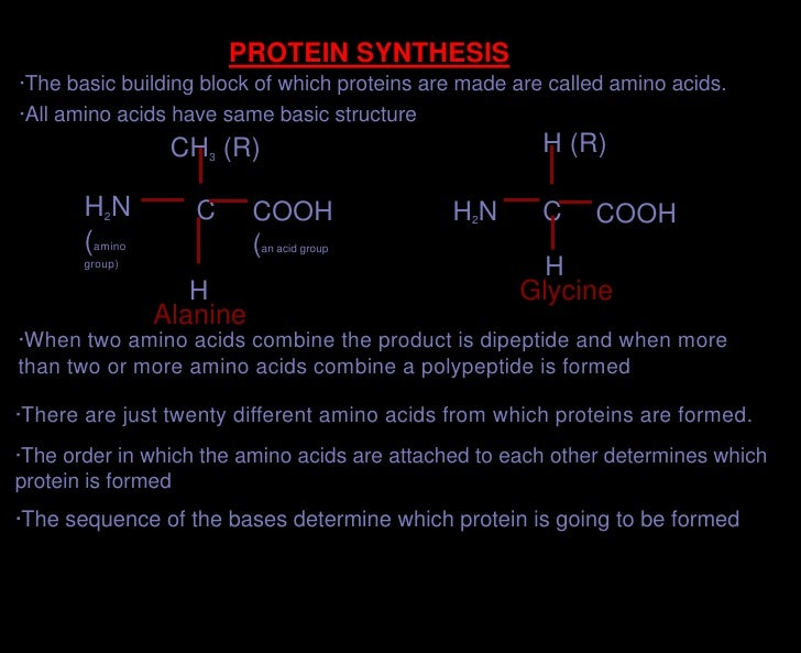 PROTEIN SYNTHESIS<br />·The basic building block of which proteins are made are called amino acids.<br />·All amino acids ...