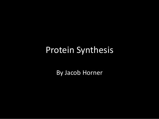 Protein synthesis Horner Jacob (cooler than Michael Lin)