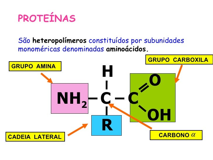 PROTEÍNAS  São heteropolímeros constituídos por subunidades  monoméricas denominadas aminoácidos.                         ...