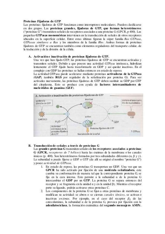 Proteínas Fijadoras de GTP Las proteínas fijadoras de GTP funcionan como interruptores moleculares. Pueden clasificarse en...