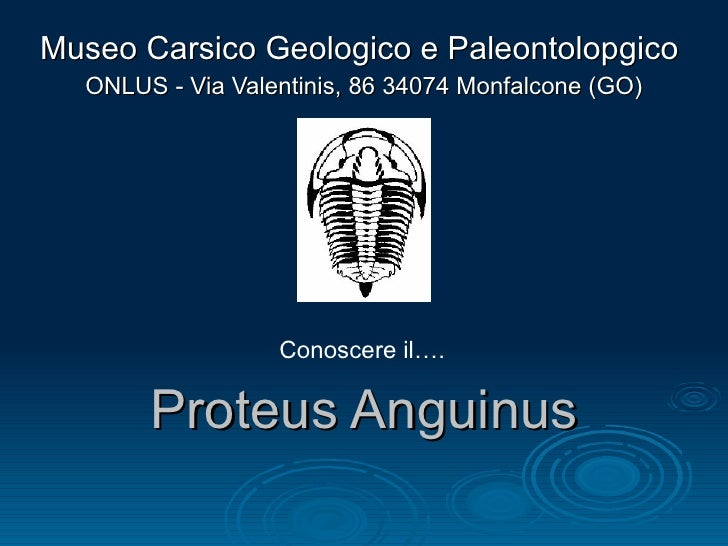 Proteus Anguinus Museo Carsico Geologico e Paleontolopgico  ONLUS - Via Valentinis, 86 34074 Monfalcone (GO) Conoscere il….