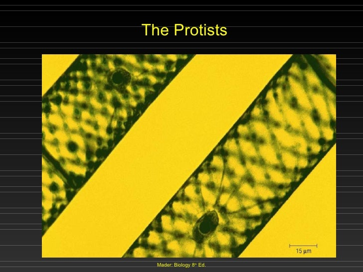 The Protists Mader: Biology 8 th  Ed.