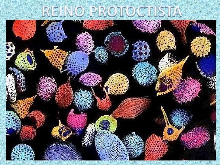 REINO PROTOCTISTA<br />