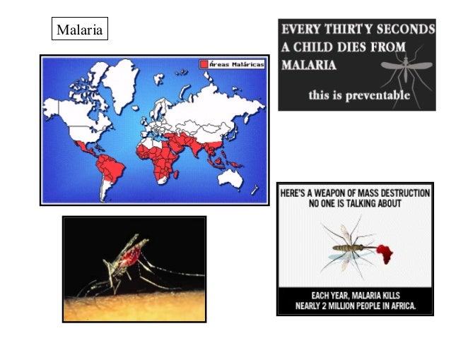 Protists   malaria