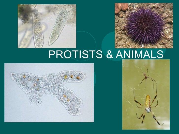 PROTISTS & ANIMALS
