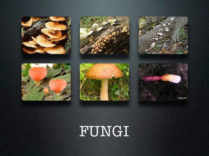 protists animals plants fungi