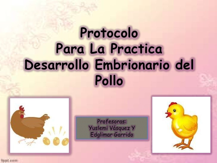 Protocolo    Para La PracticaDesarrollo Embrionario del           Pollo            Profesoras:         Yuslemi Vásquez Y  ...