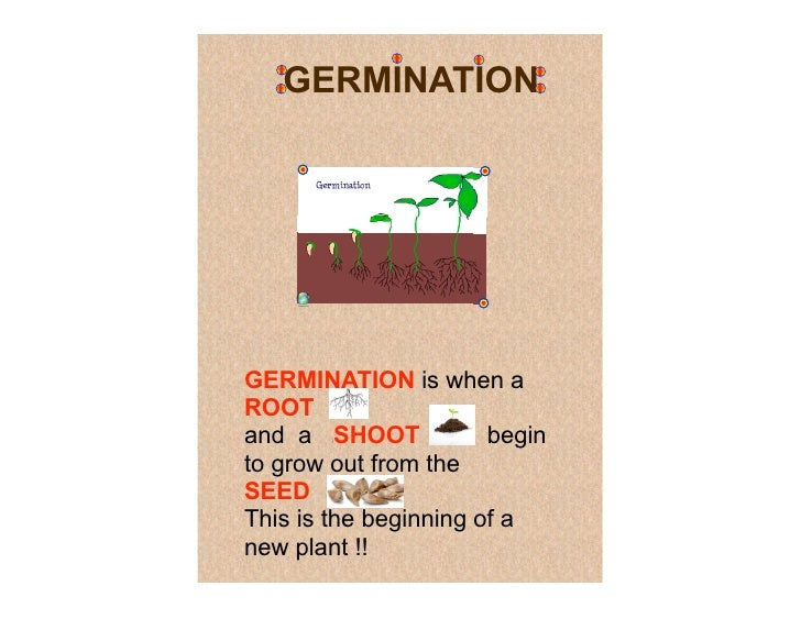 GERMINATION     GERMINATION is when a ROOT and a SHOOT         i              begin to grow out from the SEED         . Th...
