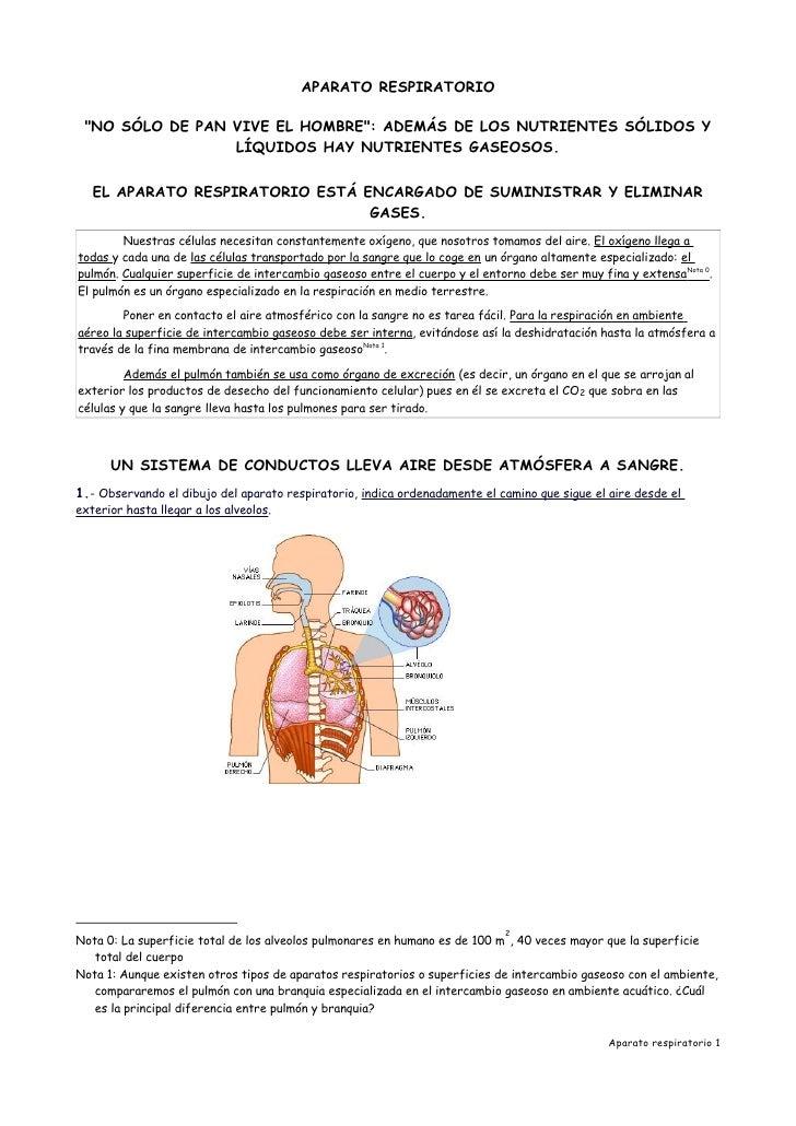 Proyecto biosfera aparato respiratorio